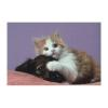 Tapis de souris Fellowes - Fellowes Cane e Gatto - Tapis...